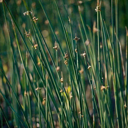 fl_wetlands-51441