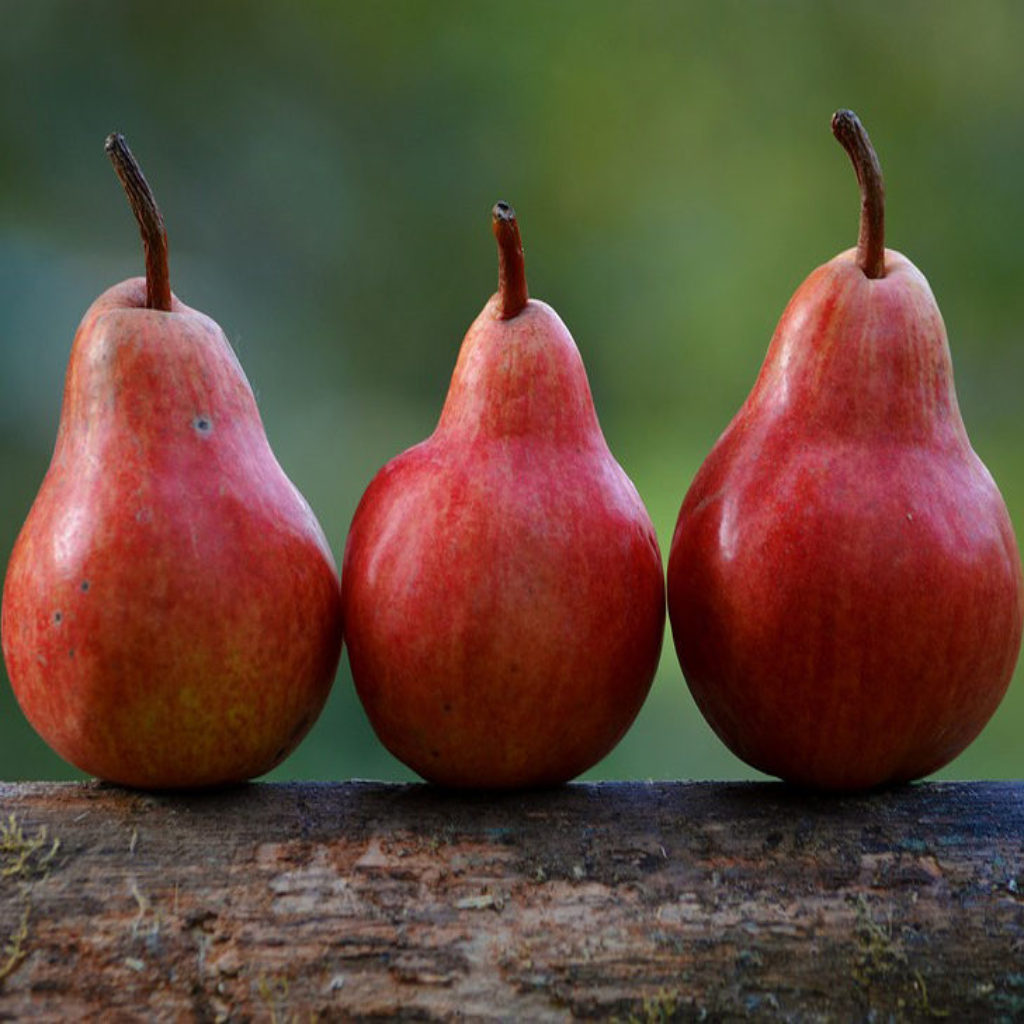 Fresh Fruit Pears Pyrus Communis Food Branch Red