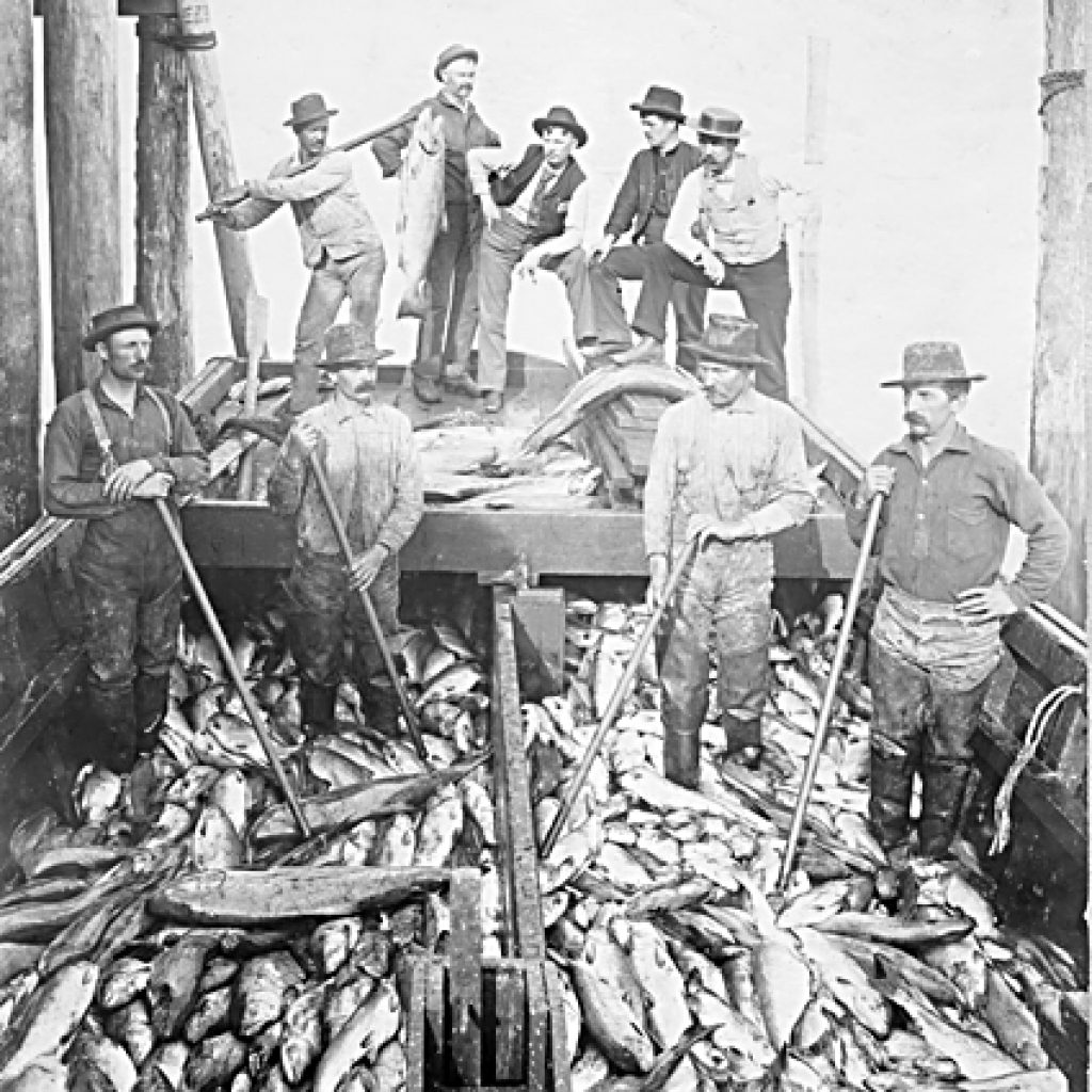 Historical black and white photo of Salmon Cannery on the Delta