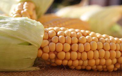 Delta corn