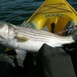 Fishing for bass in the Delta