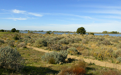 SAN FRANCISCO BAY NATIONAL WILDLIFE REFUGE