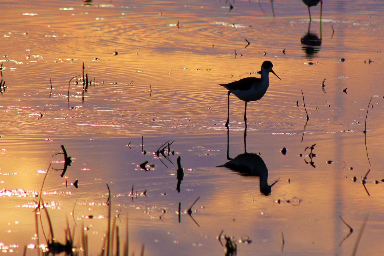 Bird in the Cosumnes River Preserve