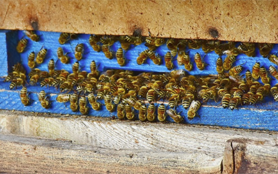 Intro to Beekeeping in the Delta